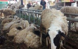 layanan rumah aqiqah di tangerang termurah kambing istimewa